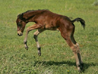 Mustang Horse Baby