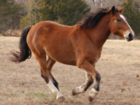 Mustang Horse image