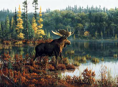 hautman brothers collection by buffalo, black bay moose photo blackbaymoose