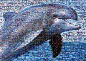 dolphin jigsaw puzzle, photomosaic by buffalo, robert silvers dolphin