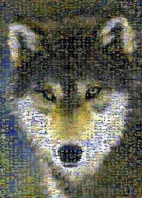 grey wolf jigsaw puzzle by buffalo, photomosaic by robert silvers, greywolf