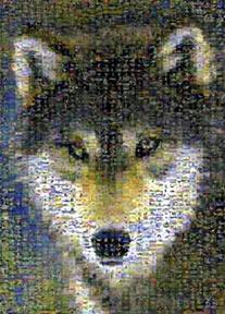 grey wolf jigsaw puzzle by buffalo, photomosaic by robert silvers, greywolf