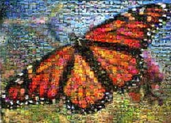 butterfly jigsaw puzzle by buffalo, photomosaic by robert silvers, butterfly