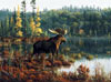 hautman brothers collection by buffalo, black bay moose photo Puzzle