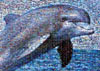 dolphin jigsaw puzzle, photomosaic by buffalo, robert silvers