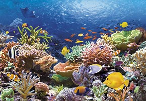 1000 pieces jigsaw puzzle by castorland, coral reef fishes coralreeffishes