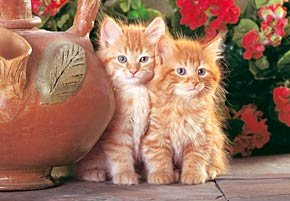 red kittens jigsaw puzzle, cute cats, 1500 puzzle by castorland redkittens