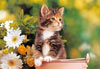 1000 pieces jigsaw puzzle by castorland, green-eyed kitten Puzzle