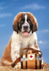 1000 pieces jigsaw puzzle by castorland, st.bernard dog