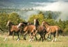 wild horses photo, castorland jigsaw puzzle, 1500 pieces