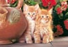 red kittens jigsaw puzzle, cute cats, 1500 puzzle by castorland