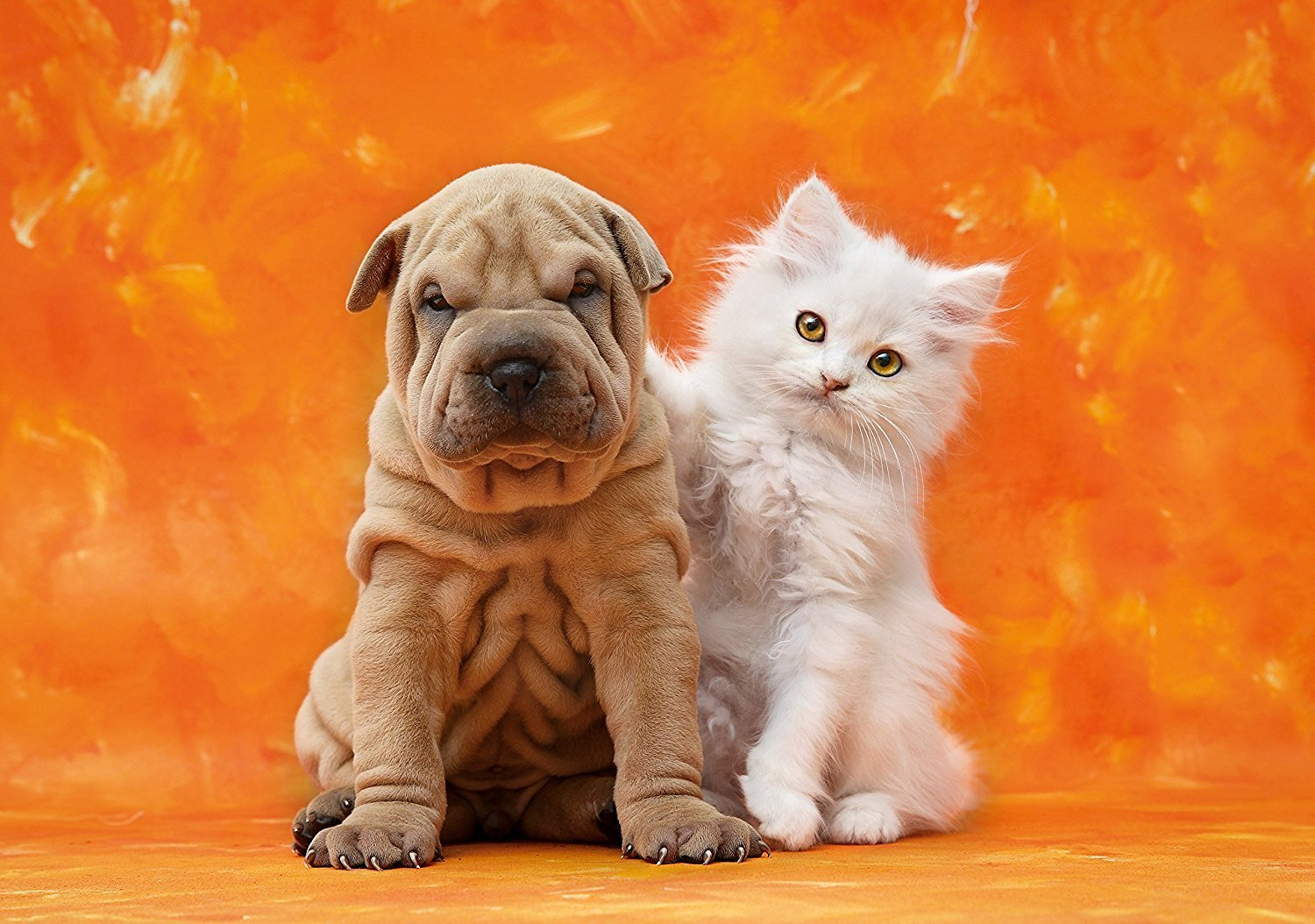 dog-and-cat-jigsaw-puzzle-1000-pieces photo so-cute