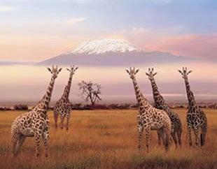 jogsaw puzzles jogsawpuzzles jigsawpuzzle giraffe puzzle giraffes