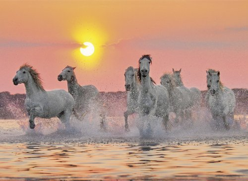 Camargue Horses View Jigsaw Puzzle made by Clementnoi JigsawPuzzles # 31991 camargue-horses