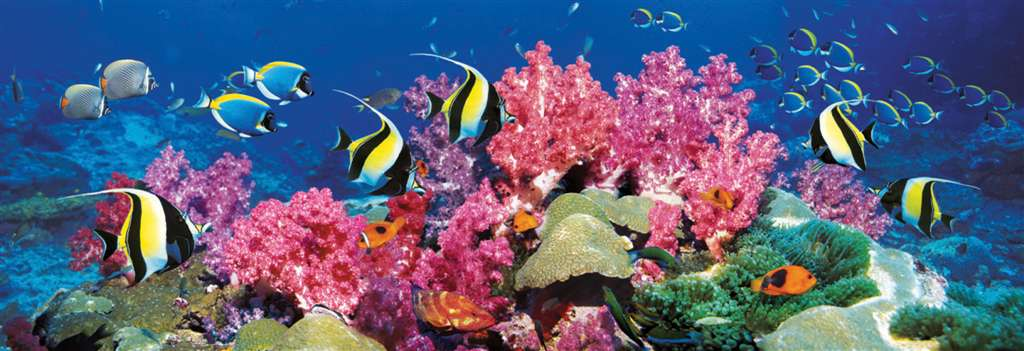 clementoni jigsaw puzzle, 1000 pieces, painting of a barrier reef photograph clementoni barrier-reef
