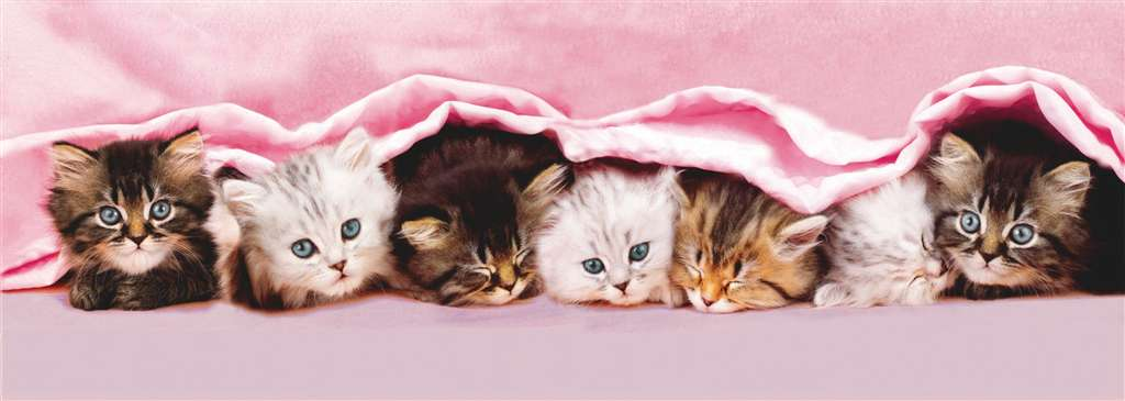 kittens under blanket, panorama puzzle, clementoni jigsaw puzzle, 1000 pieces kittens-under-blanket-panorama