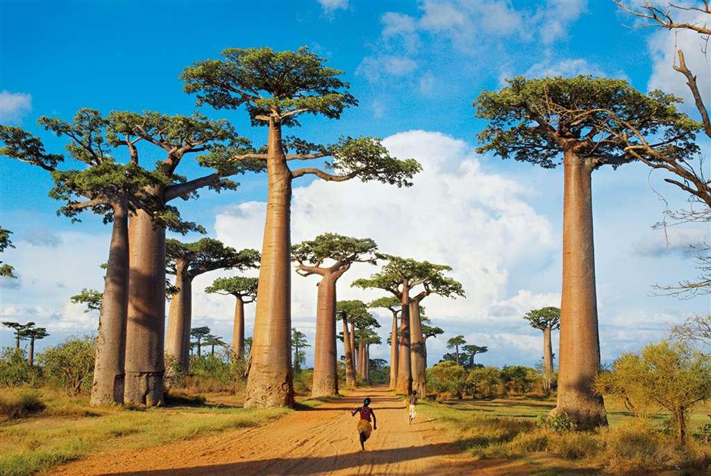 Madagascar photograph jigsaw puzzle clementoni puzzle 1000 madagascar