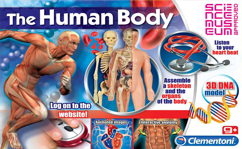 the human body, assemble a 3d skeleton and the organs of the body, clementoni human-body-3d