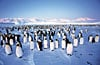 penguincolony,clementoni jigsaw puzzle, 1000 pieces, penguin colony