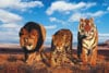 thewildlife,WildLife lion tiger leopard side by side 1000 pieces jigsaw puzzle made by clementoni # 308460