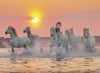 Camargue Horses View Jigsaw Puzzle made by Clementnoi JigsawPuzzles # 31991 Puzzle