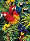 clementoni jigsaw puzzle, 1000 pieces, paintin of a majestic macaws 3D by howard robinson clemen