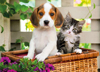 dog-and-cat-jigsaw-puzzle-1000-pieces photo