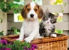dog-and-cat-jigsaw-puzzle-1000-pieces photo Puzzle