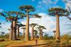 madagascar,Madagascar photograph jigsaw puzzle clementoni puzzle 1000