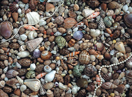 fx schmid ultra challenge jigsaw puzzle of sea gems all mixed together 1000 pieces seagems