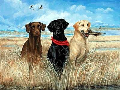 3 labrador retrievers on side of ocean beautiful painbting jigsaw puzzle 1000 pieces by fx schmid weareallrelated