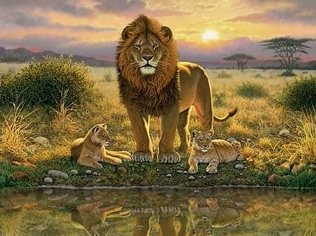 lions pride jigsaw puzzle by fx schmid made in germany puzzely made lionspride
