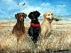 3 labrador retrievers on side of ocean beautiful painbting jigsaw puzzle 1000 pieces by fx schmid