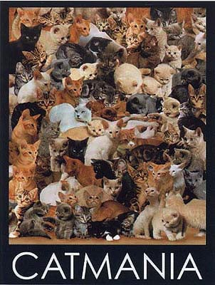 Catmania 1000 Piece Jigsaw Puzzle made by Ravensburger JigsawPuzzles Europe catmania