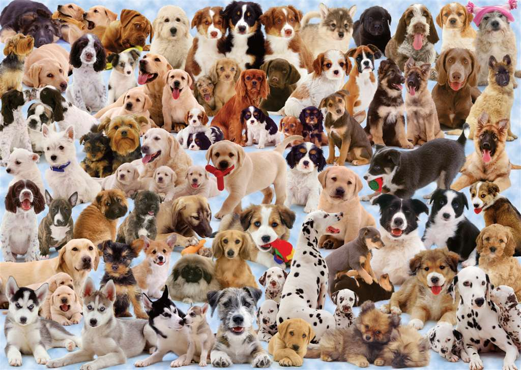 Dogs Galore Ravensburger Jigsaw Puzzle 1000 Pieces # 156306 made by Ravensberger Germany Games & Puz dogs-galore