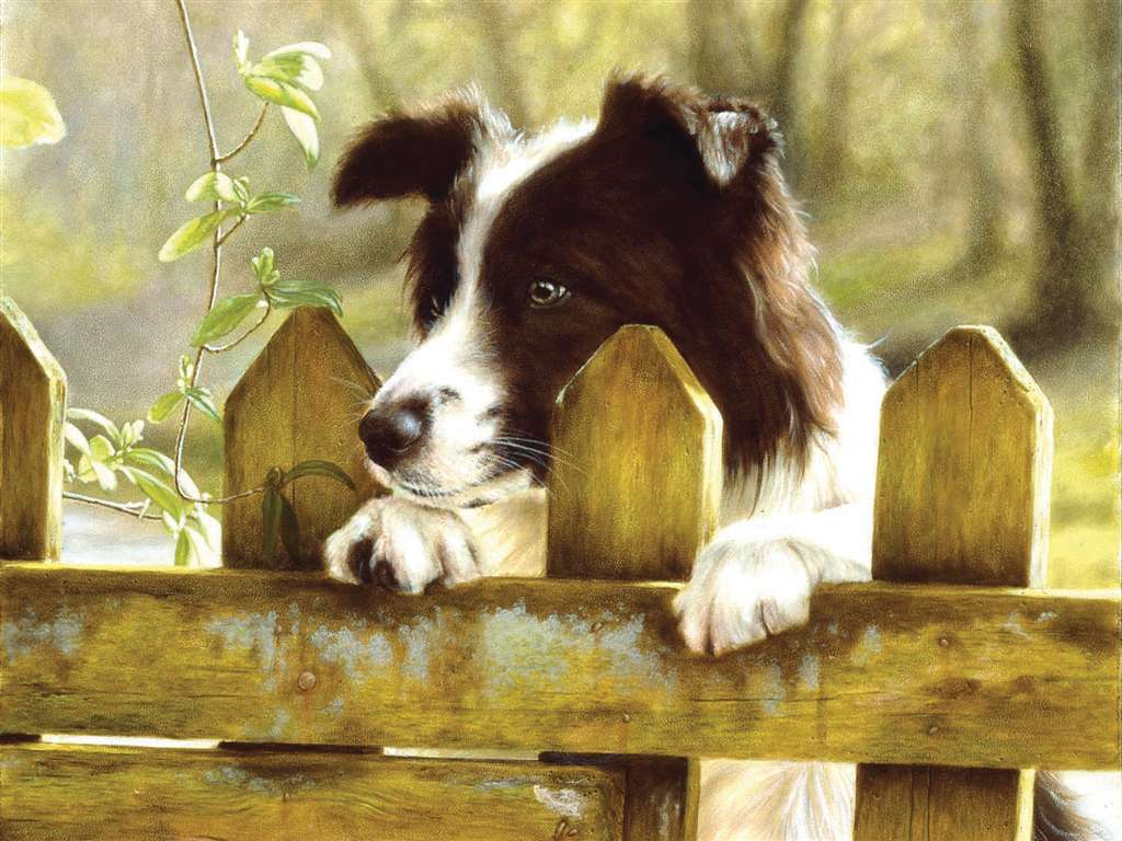 peeking-pooch-jigsaw-puzzle-1000-pieces-ravensburger softclick technology john silver painter peeking-pooch