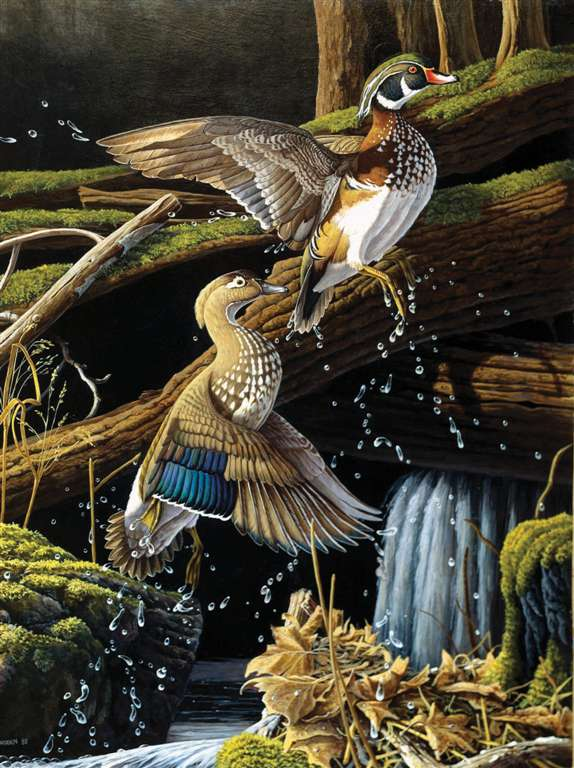 beautiful birds of the USA leaving the pond ravensburger 1000 piece jigsaw puzzel # 157068 leaving-the-pond
