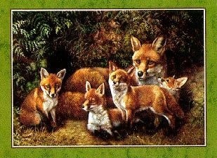 familyoffoxes