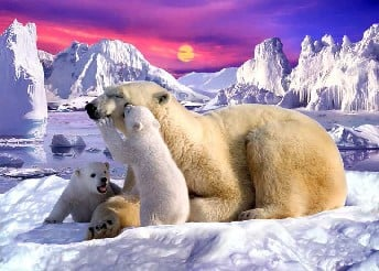 Polar Bear Family Photograph 1500 Piece jisgaw puzzle ravenberger toys and games german puzzle maker polarbearfamily