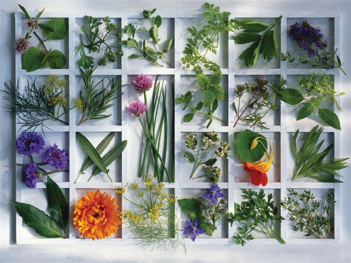 Jigsaw Puzzle 1500 pieces kitchen herbs by Christel Rosenfeld  manufactured by Ravensburger # 163724 kitchen-herbs