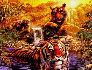 At The Water Hole 2 Tigers Jigsaw Puzzle 2000 Pieces by Ravensburger Puzzles # 166466 atthewaterhole