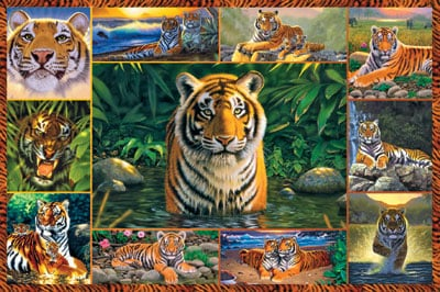 World of Tigers 5000Pieces Jigsaw Puzzels by Ravensburger Games number 174249 world-tigers-chrishiett-ravensburger