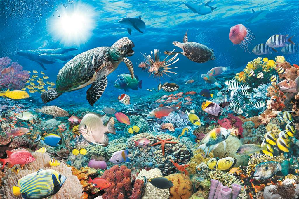 underwater tranquility 5000 piece jigsaw puzzle by Ravensburger with softclick texchnology underwater-tranquility