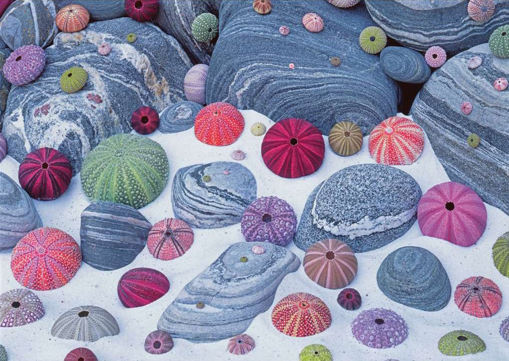 colorful seashells photograph collage jigsaw puzzle ravensburger puzzle 190454 colorful-seashells