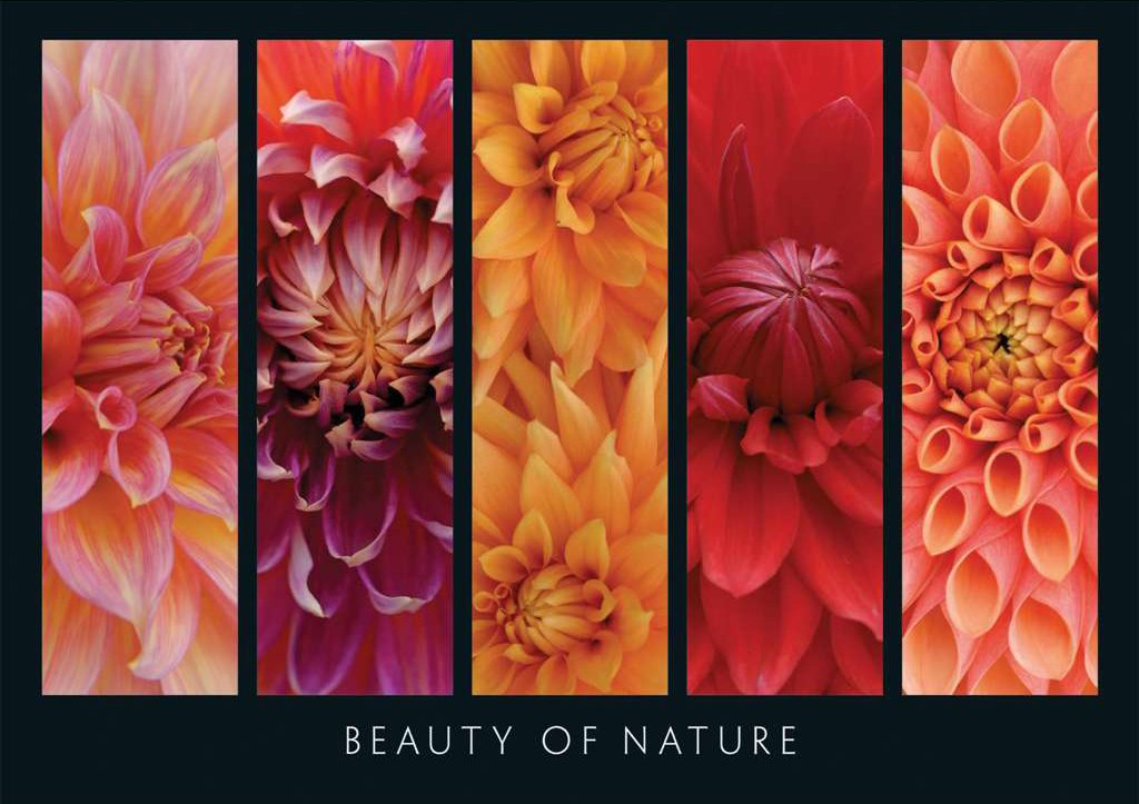 Herzig Fotographie Beauty of Nature Flower Collage 1000 Pieces Jigsaw Puzzle by Ravensburger Puzzles beauty-of-nature-ravensburger