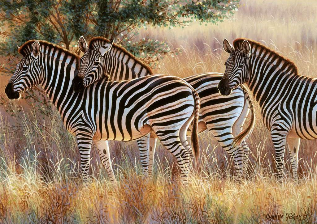 Ravesburger JigsawPuzzle 1000 pieces Beautiful Zebras Cynthie Fisher beautiful colors 191130 2011 beautiful-zebras