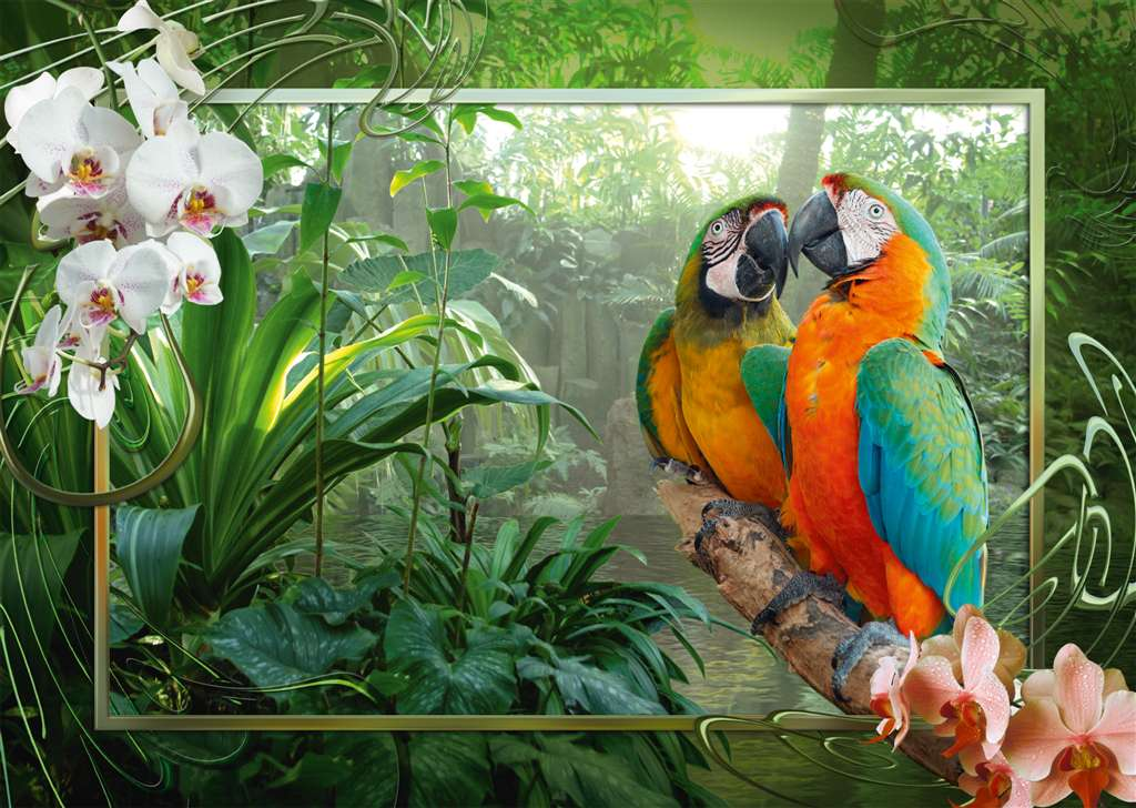 cozy macaws beautiful birds ravensburger 1000 piece jigsaw puzzel # 191888 cozy-macaws