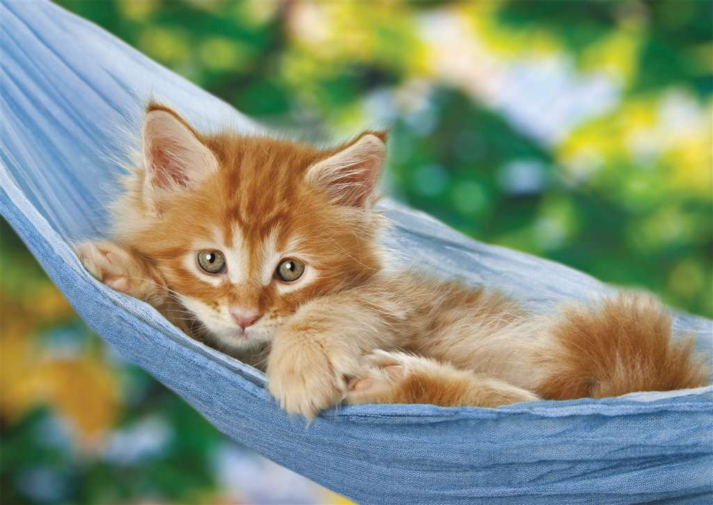 Sabine Rath's photograph of a kitty in a swing ravensburger 1000 piece jigsaw puzzle with softclick  kitty-in-a-swing