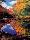 indian summer in canada Ravensburger 1000 Piece Jigsaw Jungle Puzzle # 153435