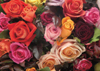 A Rosy Bunch of Roses Flowers 1000 Pieces Jigsaw Puzzle by Ravensburger Puzzles & Games